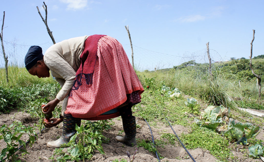 Creating Sustainable Livelihoods Through Agriculture Inputs